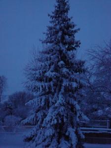 A wintry snow scene